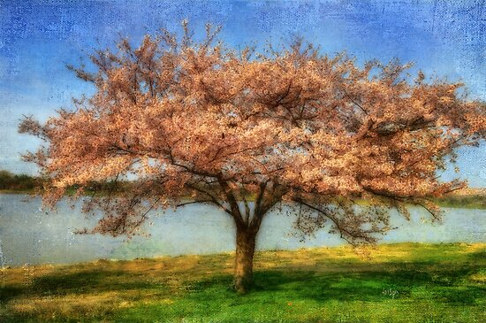 Cherry Tree by Lois  Bryan
