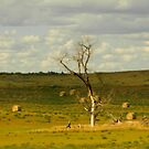 Dead Wood in  North Dakota by WonderlandGlass