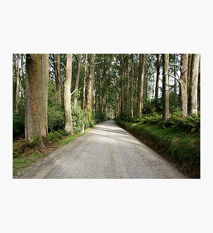 Yarra Ranges National Park Photographic Print