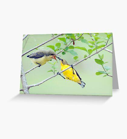 Grubs Up - sunbird feeding babes  Greeting Card