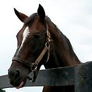 Sunshine Forever RIP - Old Friend's Equine  by Tracey  Dryka