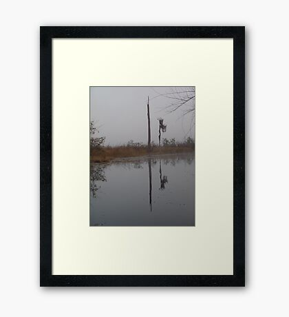 fog,Econfina Creek,wasp tree,cypress,swamp Framed Print