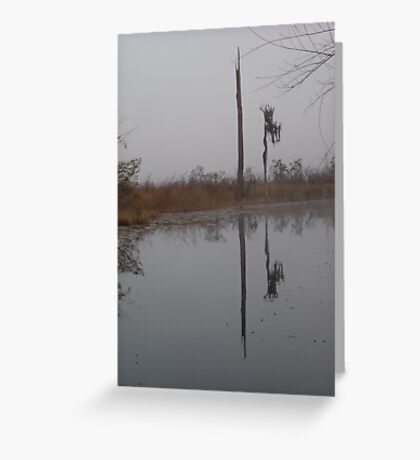 fog,Econfina Creek,wasp tree,cypress,swamp Greeting Card