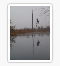 fog,Econfina Creek,wasp tree,cypress,swamp Sticker