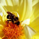 Yellow Flower with Bee by Andre Faubert