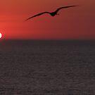Flying to the Sun - Volando al Sol by PtoVallartaMex