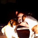 Buster and Sweetie soo in love by Brenda Dahl