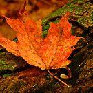 Orange Leaf by Andre Faubert