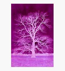 Purple lightning Photographic Print