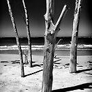 Skeketon Tree, Sarasota 2012 by Frank Bibbins