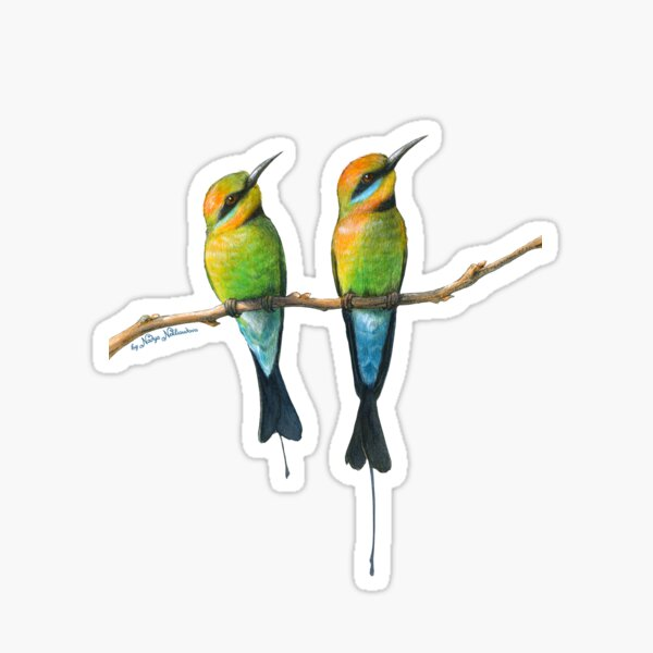 Rainbow Bee-Eaters Watercolour Design - Blue Background Sticker