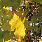 Spanish Grapevine by Astrid Ewing Photography