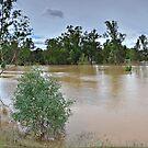 Wagga Wagga Beach carpark Flood Pano by bazcelt
