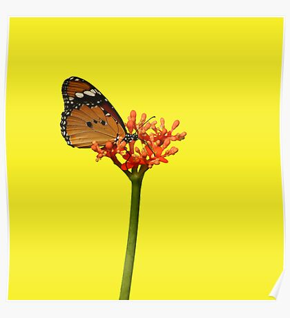 African Monarch on Tropical Flower Poster
