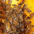 "I like to ""bee"" busy. by Jeannie26"