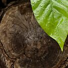 Leaf III by Clockworkmary