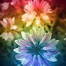 Flower Power by Andre Faubert