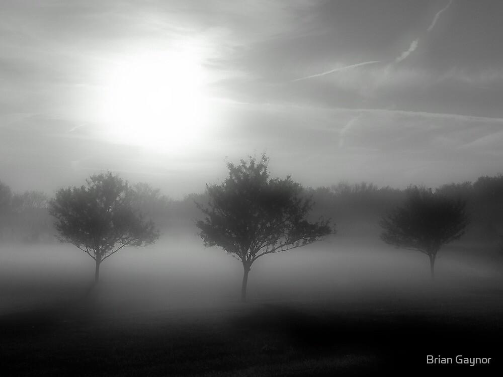 Shrouded in Fog by Brian Gaynor