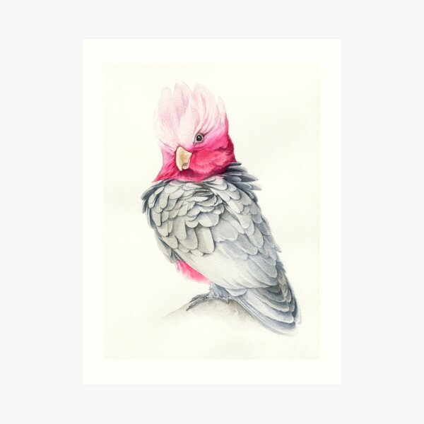 Pink parrot painting Art Print