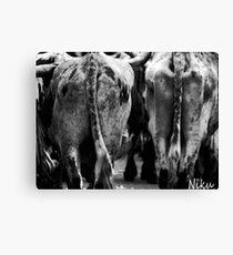 Farm Animal_ cow's behind. Canvas Print