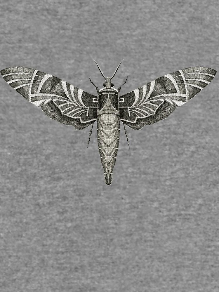 Moth by jenofuto