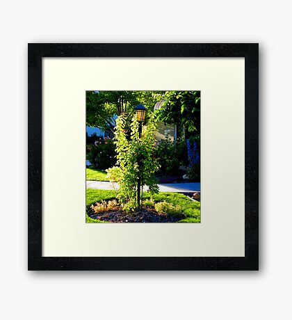 Delicately Wrapped Framed Print