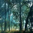 Sunbeams by Eve Parry