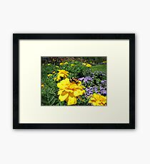 Close Up of a Bumble Bee Pollinating a Yellow Marigold Garden Plant ~ Insect Photography Framed Print