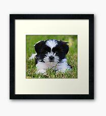 Gracie puppy Framed Print