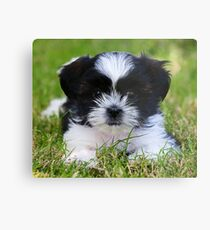 Gracie puppy Metal Print