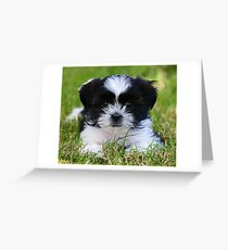 Gracie puppy Greeting Card