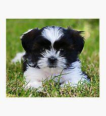 Gracie puppy Photographic Print