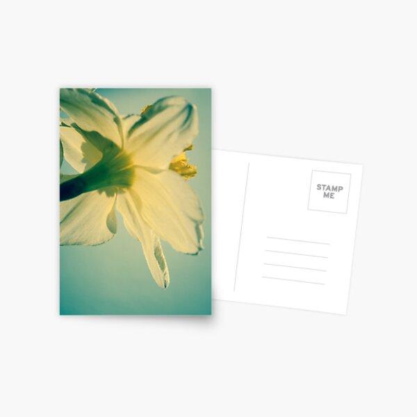 Daffodil I Postcard