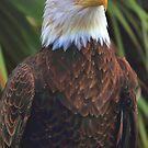 Eagles Eye by Jim  Egner