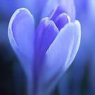 Tulip Prayer by Gregory J Summers
