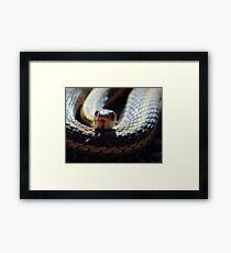 Snake Tongue Framed Print