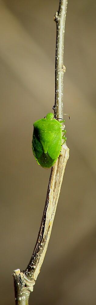 Green Bug by wanblake