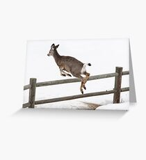 Black Tail Deer Greeting Card