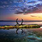 Sculpture by the Sea by Arfan Habib