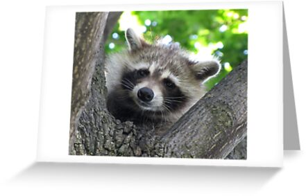 Sad raccoon eyes by hummingbirds