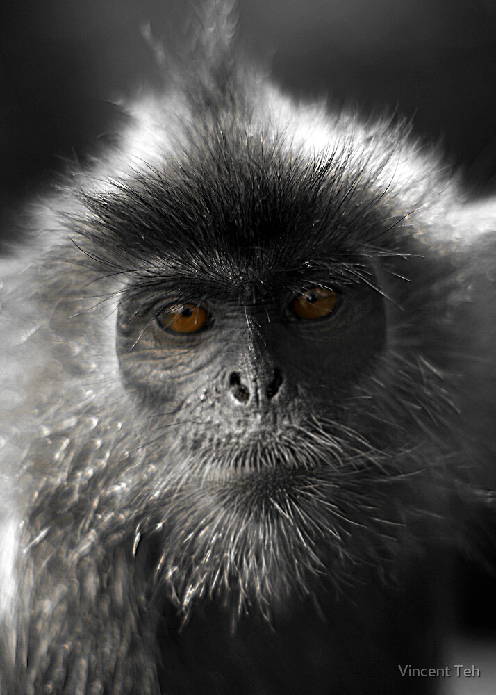 Monkey Glamour  by Vincent Teh