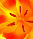Orange dream by KatarinaD