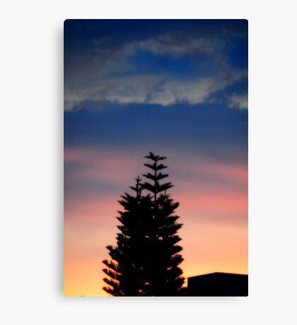 Norfolk Island Pine Sunset Canvas Print