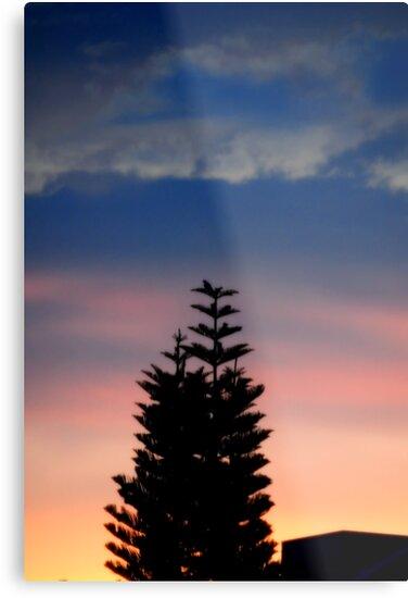Norfolk Island Pine Sunset by glennc70000