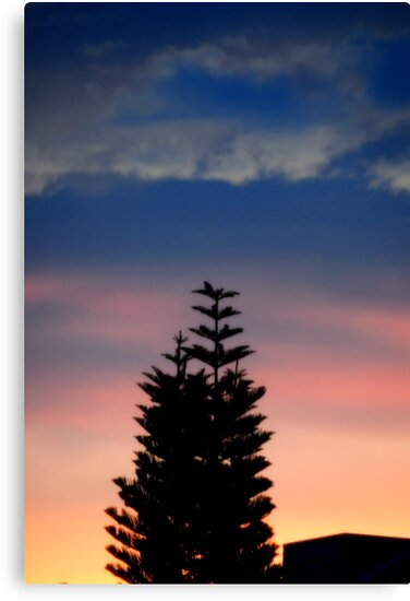 Norfolk Island Pine Sunset by glennc70000