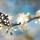 Florida Day Moth by Beth Mason