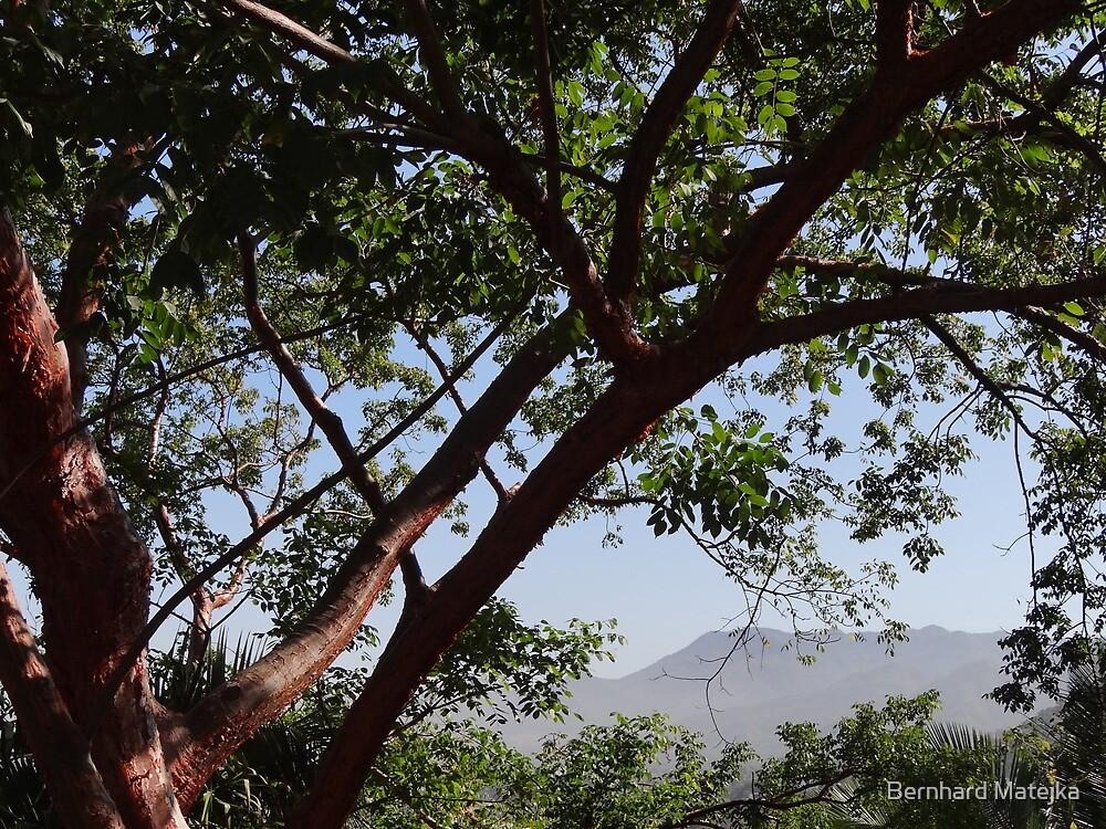 Sierra Madre  by Bernhard Matejka