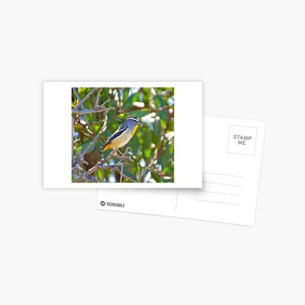 PARDALOTE ~ Spotted Pardalote LT4DfERS by David Irwin ~ WO Postcard