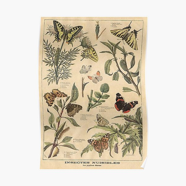 vintage butterfly print Poster