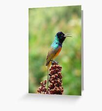 Orange-breasted Sunbird Greeting Card